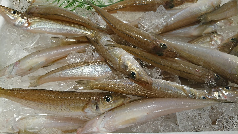 鮮魚センターマリーン